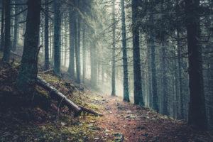 Waldweg mit Nebel und schummerigem Licht